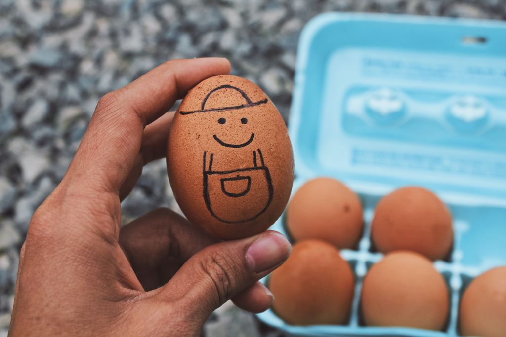 Eggs health benefits and what are alternatives for vegans
